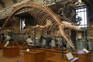 ua-basilosaurus