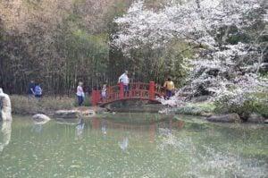ua-sakura-festival