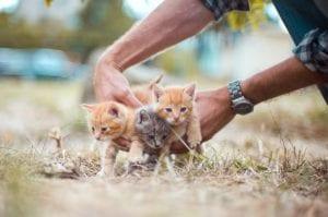 kittens, animals, animal charity, animal sanctuary, non-profit charity